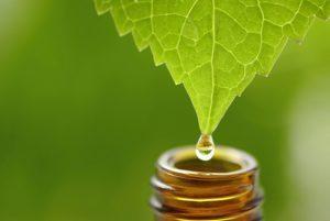 Como cuidar el tracto respiratorio con aromaterapia