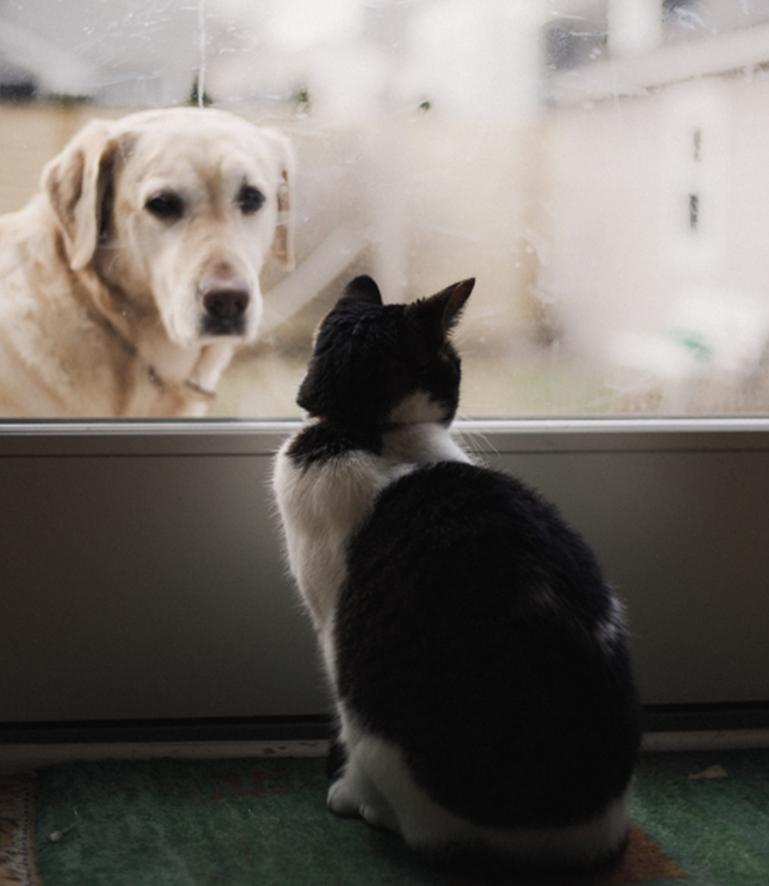 Flores de Bach en perros y gatos: Miedo a los petardos.