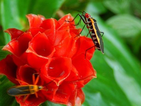 Cómo controlar las alergias y rinitis en la llegada de la primavera.